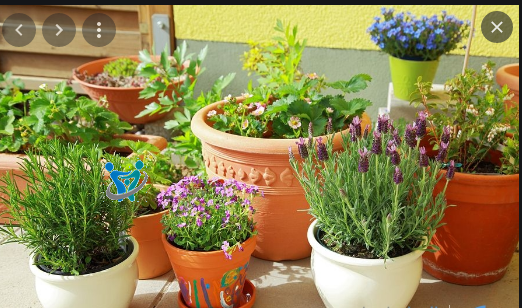 زراعة الورود والشتلات