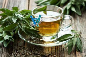الأعشاب المرجو أستخدامها لعلاج أمراض المناعة